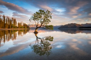 lake-wanaka-tree-5